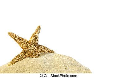沙子, starfish, 小山, 單個