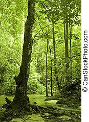 河, 森林, 綠色