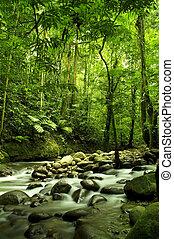 河, 綠色的森林
