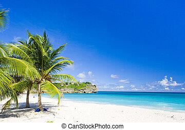 海灣, 加勒比海, 犯規, 巴巴多斯