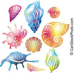 海貝殼, 上色