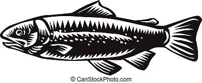 海, 鱒魚, 有斑點