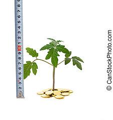 測量, 成長, 事務