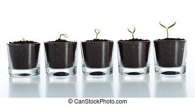 演化, 成長, -, 植物, 年輕