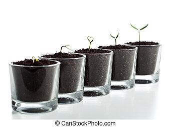 演化, 階段, 植物, 年輕
