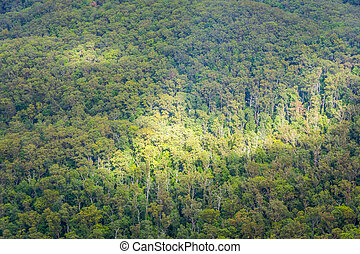 澳大利亞人, 空中, 森林, 看法