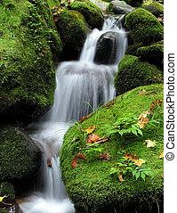 瀑布, 森林