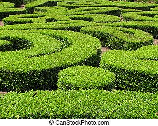 灌木, 裝飾, 綠色