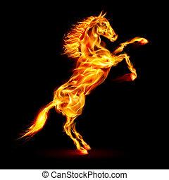 火, 培養, 馬, 向上。