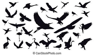 照片, 不同, 集合, 被隔离, 背景。, 白色, 鳥