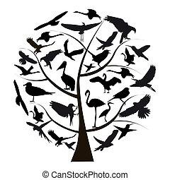 照片, 不同, 集合, 被隔离, 背景, 白色, 鳥