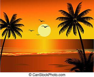 熱帶的海灘, 插圖