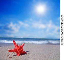 熱帶的海灘, starfish