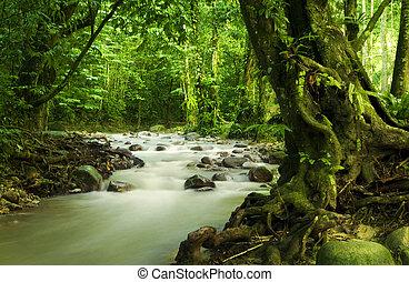 熱帶, 河, 雨林