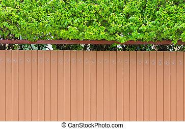 牆, 房子, 小的樹, 綠色