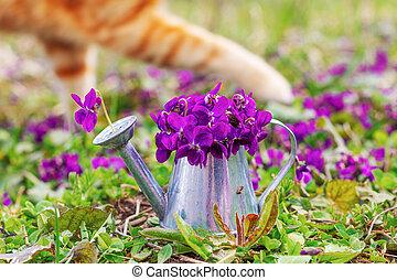 特寫鏡頭, 花, 草地, 紫羅蘭, 花束, 上水, 姜貓, 錫, 森林, 背景, 花, paws, 罐頭