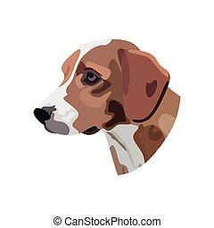 狗, 頭, 白色 背景, 插圖