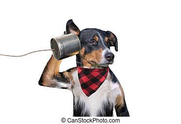 狗, can), (tin, 電話