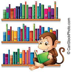 猴子, 書架, 閱讀, 前面