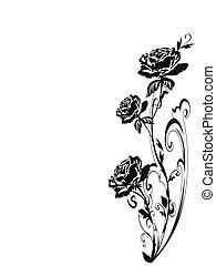 玫瑰, 黑色半面畫像