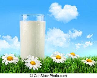 玻璃, 草, 雛菊, 牛奶