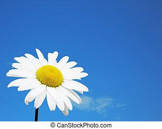 白色的花儿, 天空