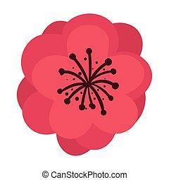 白色的花儿, 紅的背景
