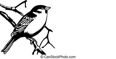 白色, 矢量, 背景, 插圖, 鳥