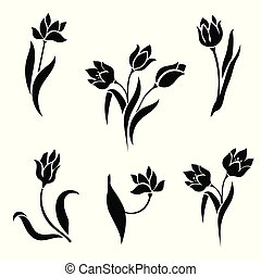 白色, 背景。, 黑色半面畫像, 鬱金香