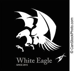 白色, 鷹, hawk.