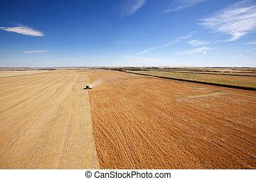 看法, 空中, 收穫