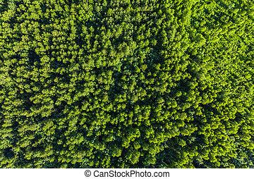 看法, 頂部, 樹, 綠色, 夏天, forest., 空中