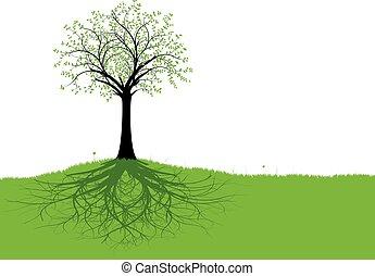 矢量, 樹, 根