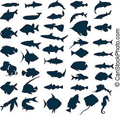 矢量, 湖, 插圖, 黑色半面畫像, fishes., 海