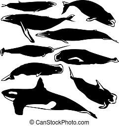 矢量, 鯨魚, 黑色半面畫像