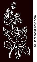 矢量, 黑色, 三, 背景, 被隔离, 玫瑰, 白色, 插圖