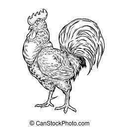 矢量, cock., 插圖