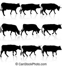 矢量, cow., 黑色, 黑色半面畫像, 彙整, illustration.