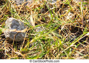 石頭, 草