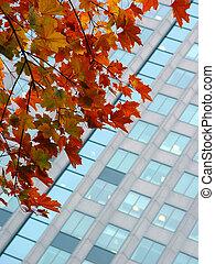 秋天, 城市