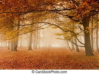 秋天, 有霧
