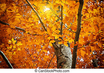 秋天, 樹
