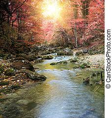 秋天, 河, 森林