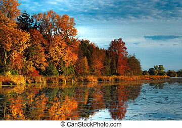 秋天, 濱水區, hdr, 森林