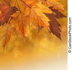 秋季离去, 淺的駐點, 背景