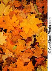 秋季离去, 鮮艷, 背景