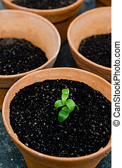 种植, 植物