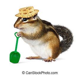秸桿, 有趣, 鏟, 帽子, chipmunk
