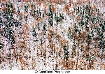 空中, 冬天, 看法, 森林