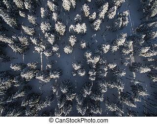 空中, 冬天, -, 雪, 樹, 森林, 蓋, 看法